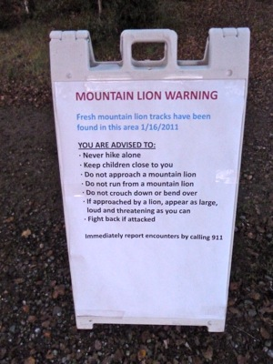 Mountain lion warning sign on Stanford campus