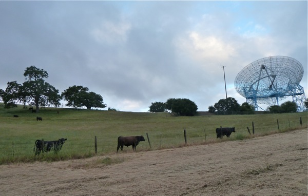 herd grazing on Big Dish land