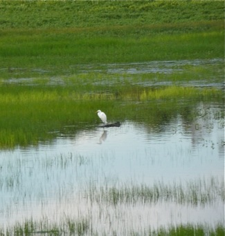 Snowy Egret at Lake Lagunita
