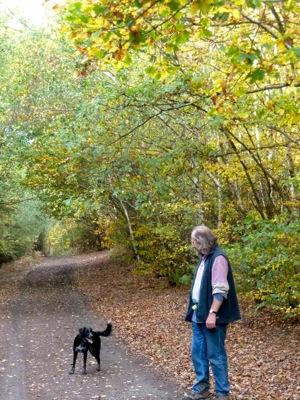 woods in Kent, England