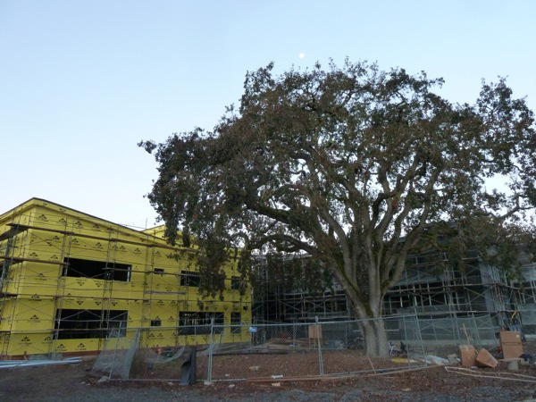 Hillview School construction